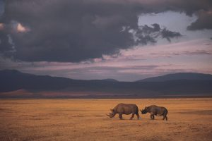 One rhino gets killed every eight hours.