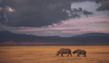 One rhino gets killed every eight hours.