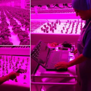 Innovation, New Technology Feed Plant Growth