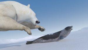 polar bear attacks seal